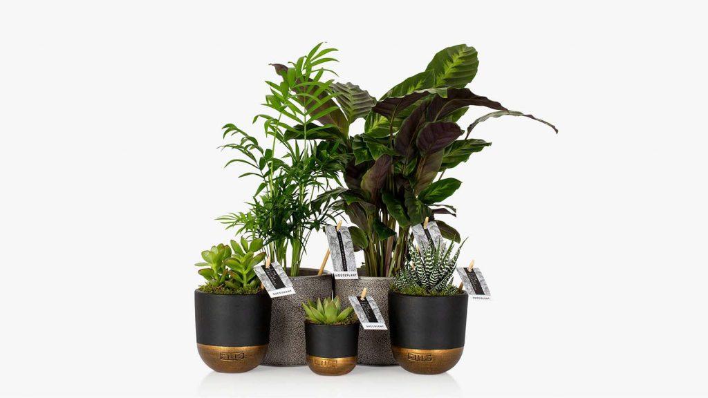 The Little Botanical New Home Bundle